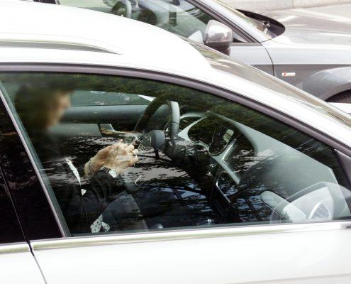 Eine Person (Gesicht unkenntlich) fährt in seinem Auto mit Handy am Steuer